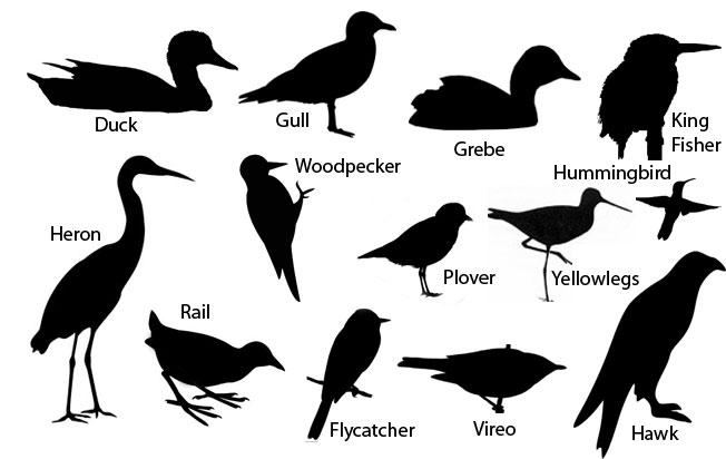 how-to-identify-birds