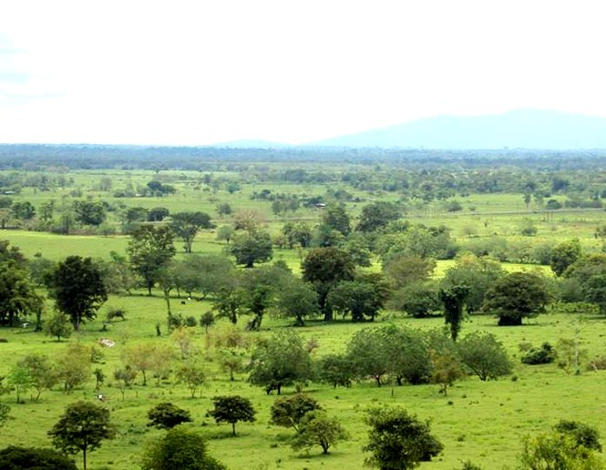 pastures and agricultural lands