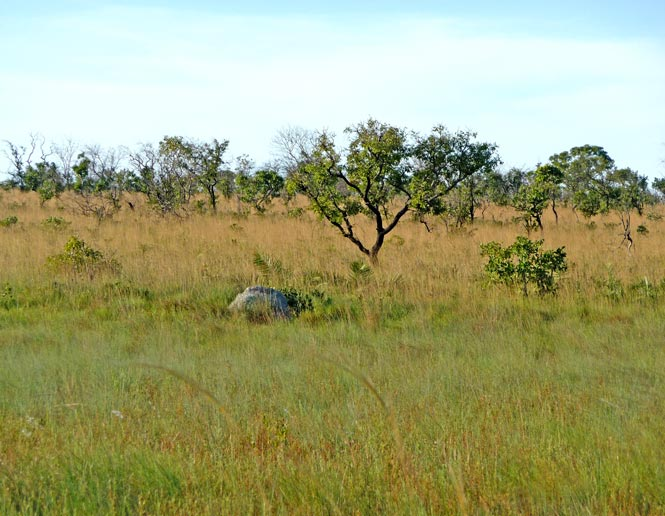 campo grasslands