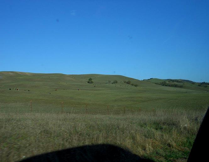 northern temperate grasslands