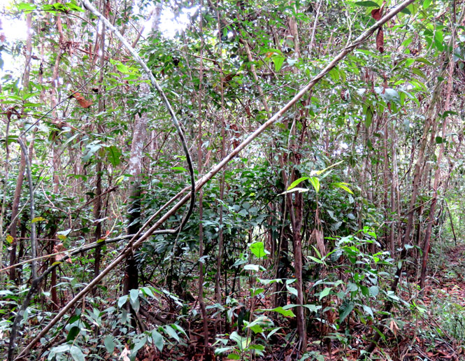 second growth forest and woodlands