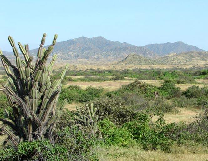 arid lowland scrub