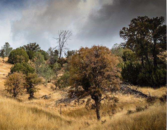 Pine-Oak Forest