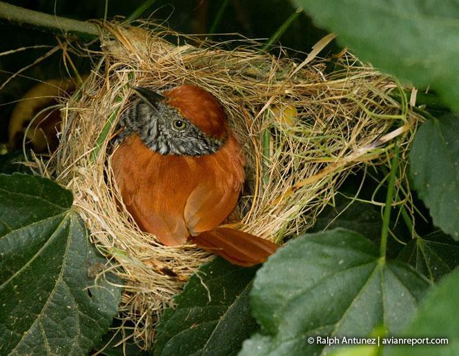 bird_reproduction