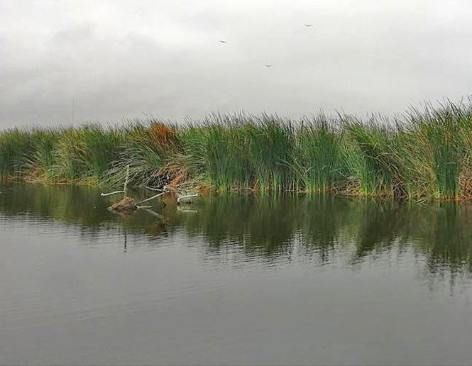 freshwater lakes and ponds