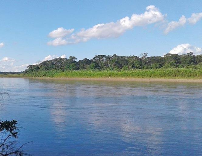 river island scrub