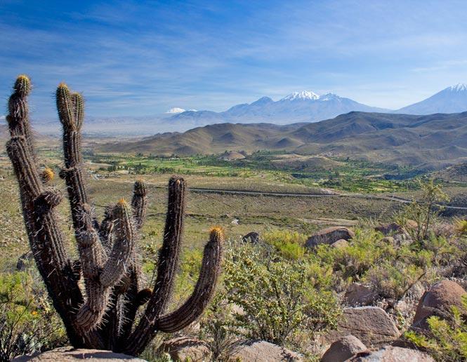 arid montane scrub