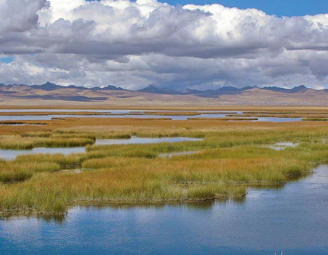 freshwater marshes