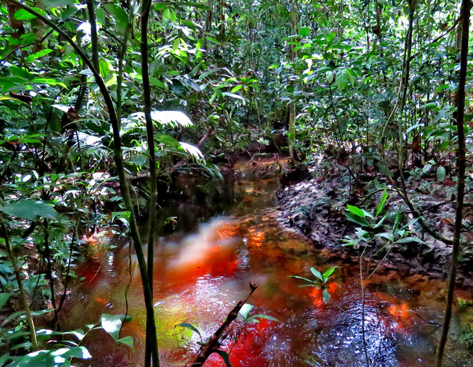 streamside