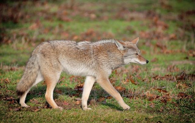 coyote o'leno state park
