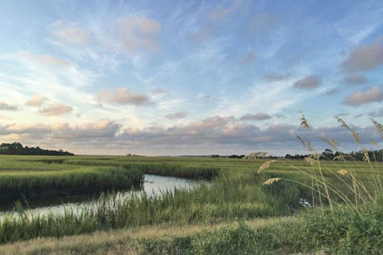 salt marsh george crady
