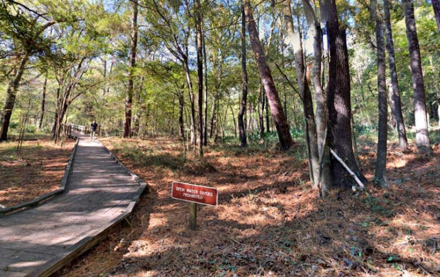 North Florida Hardwood Forest