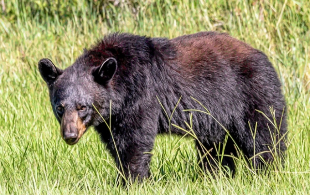 florida black bear o'leno state park