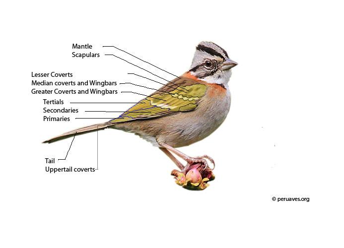 bird feather areas
