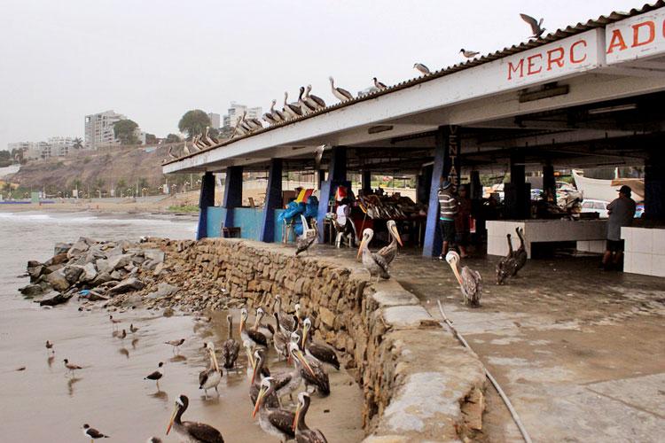 birds of the chorrillos fish market