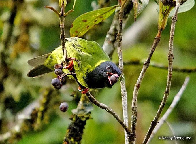birds as indicator species