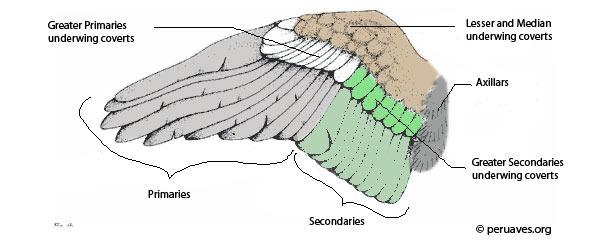 bird-flight-tail-feathers