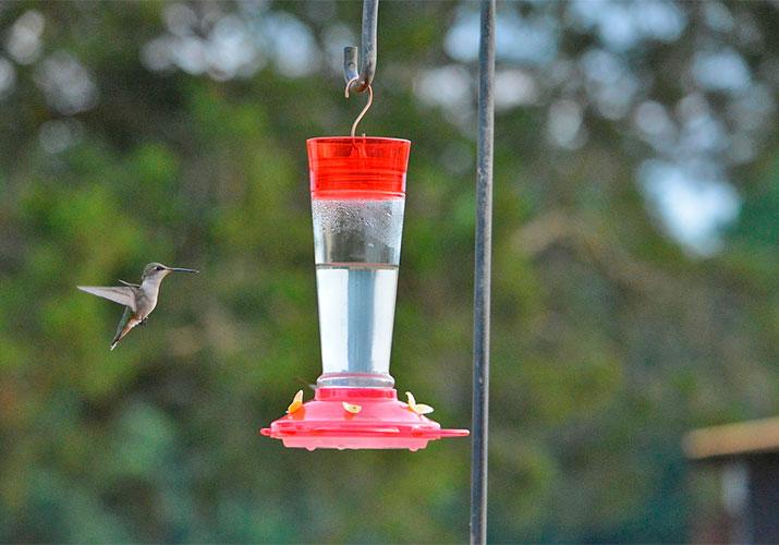 hummingbird-feeder-optimized
