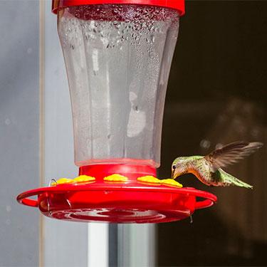 nectar for birds