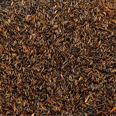 nyjer seed bird food