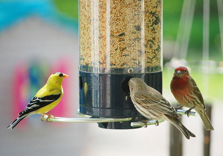 bird feeding fundamentals