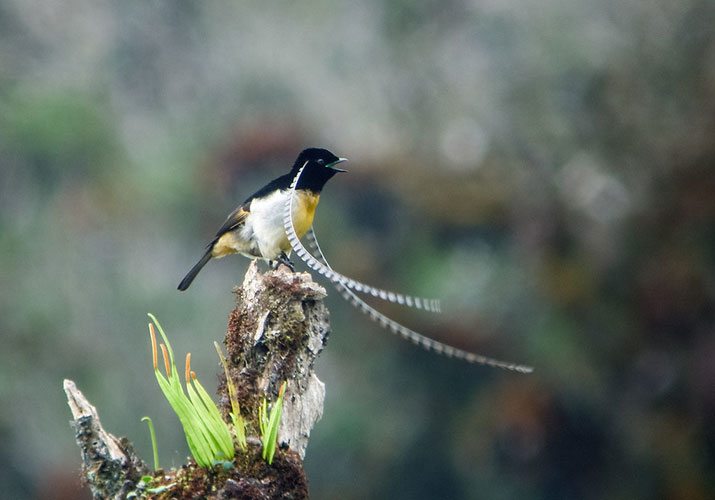 bird-feathers