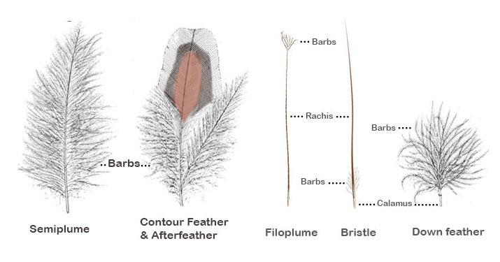 types-feathers