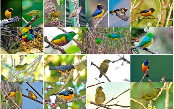 bird diversity