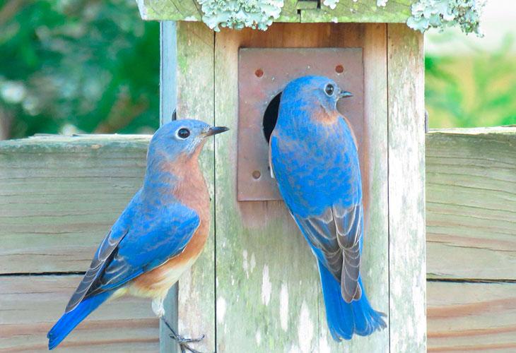 bluebird multiple partners