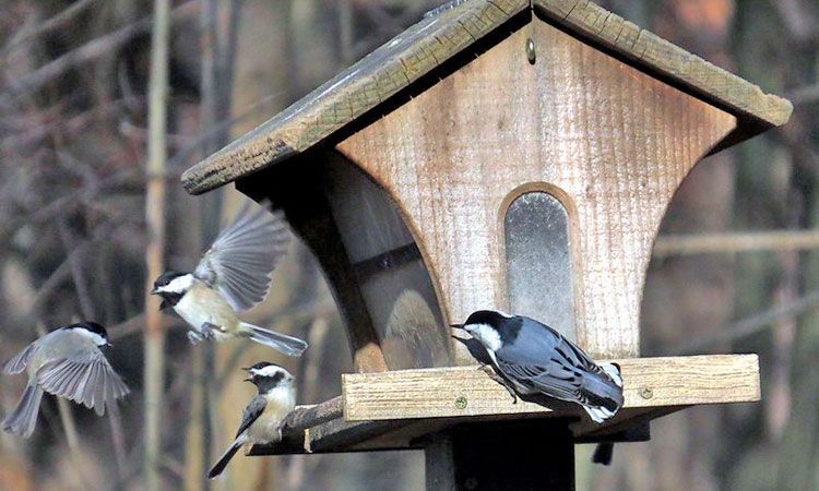 Hopper Bird Feeder: Types & how it works
