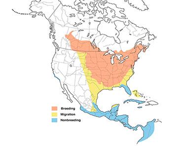 baltimore oriole range map