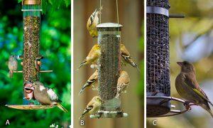 tube bird feeders beginners
