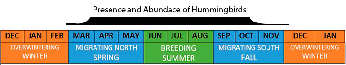 when to feed hummingbirds
