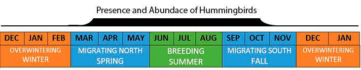 how long hummingbirds stay in Eastern North America