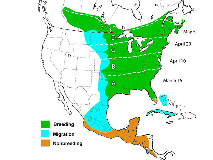 hummingbird migration Eastern North America