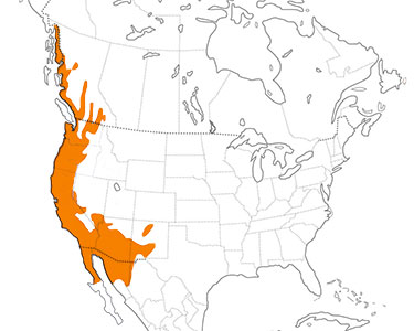 anna's hummingbird range map