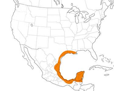 buff-bellied hummingbird range map