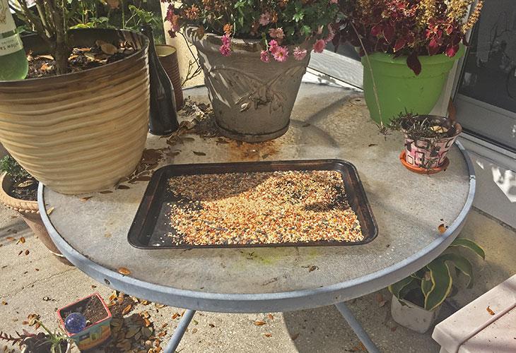 baking tray used as bird feeder