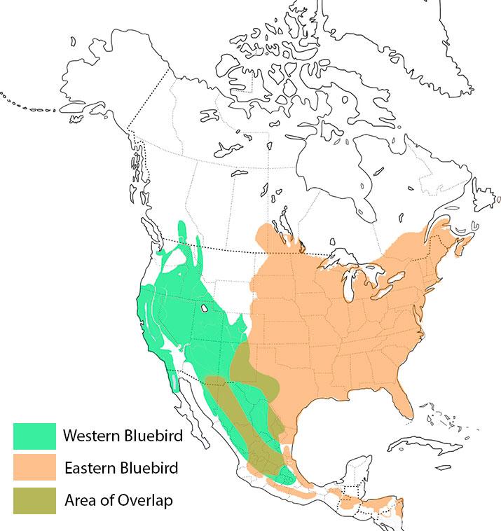 range-map-western-bluebird-eastern-bluebird