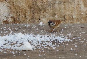 it ok to feed birds rice
