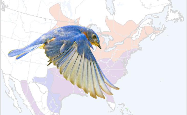 range of the eastern bluebird